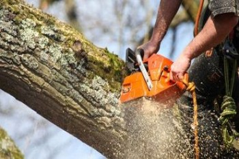 Tree Surgery and Pruning 1