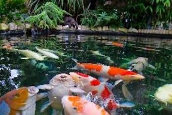 Ponds and Wildlife